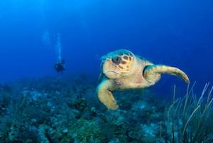 Begegnung mit einer Schildkröte