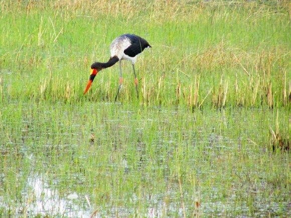 Botswana Vögel