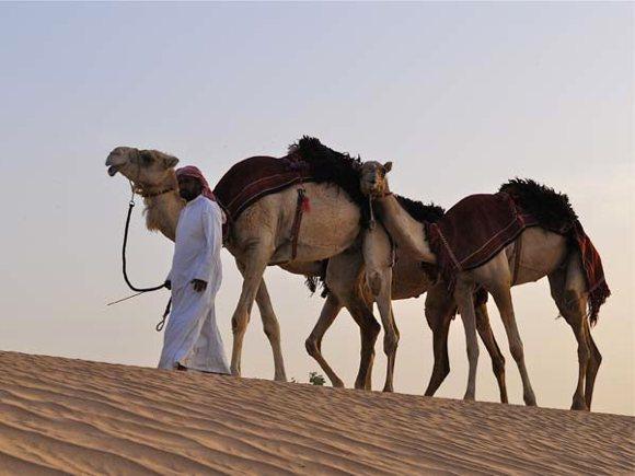 Wüste Sharjah