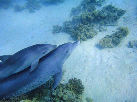 Schnorcheln mit frei lebenden Delfinen