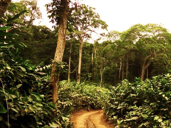 Regenwald Odzala Kongo