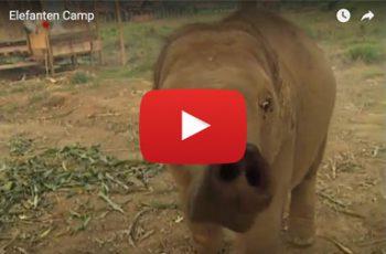 Video Elefantencamp