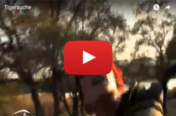 Video Ranthambore