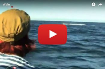 Video Buckelwale