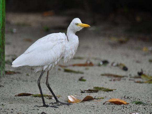Fauna auf Palau