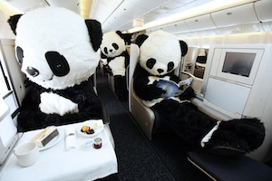 Fotoshooting mit Pandabär in der Business Class