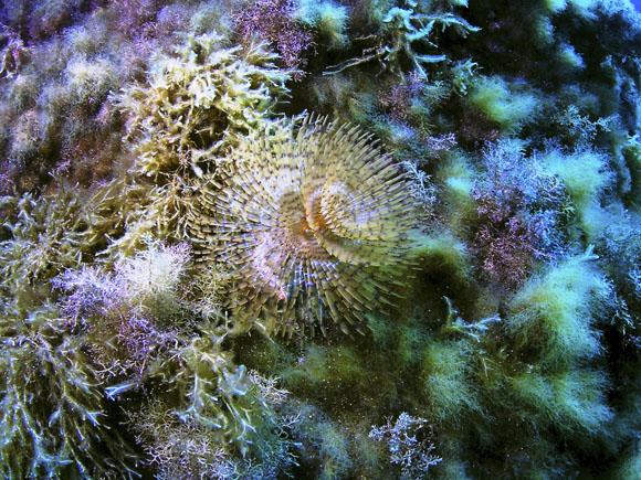 Unterwasserwelt Gozo