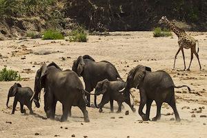 Elefanten im Schutzgebiet