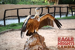 Wildlife Conservation Centre Eagle Heights Gambia