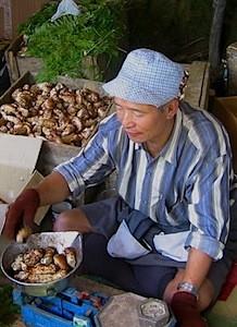 Matsutake Market ©amanresorts