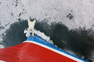 Arctic Expedition Ship Bow Polar Bear-Chris Westwood 2013-IMG1301 Lg RGB