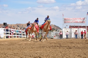 Camel Race Virginia City©TravelNevada_