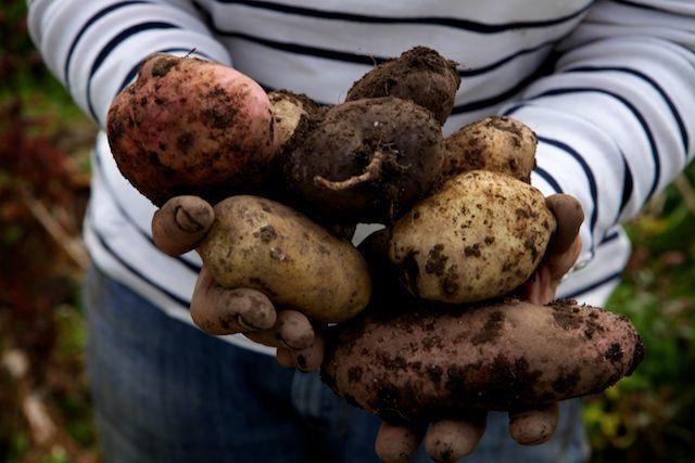 Kartoffelgerichte sind fester Bestandteil der nordirischen Küche.