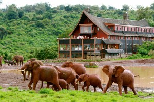 Elefanten vor dem The Ark Hotel Kenya