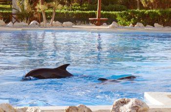 Delfinarium in Tulum, Mexiko