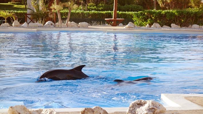 Eines der Delfinarien in Mexiko