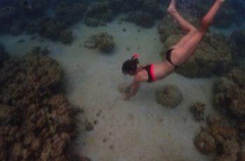 Palau Pacific Resort führt Riesenmuschel-Pflanzprogramm ein © Judith Hoppe