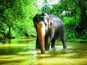 Elefant beim Elephant Freedom Project auf Sri Lanka. Bild © Larissa Gerlach/reisefieber-reisen GmbH