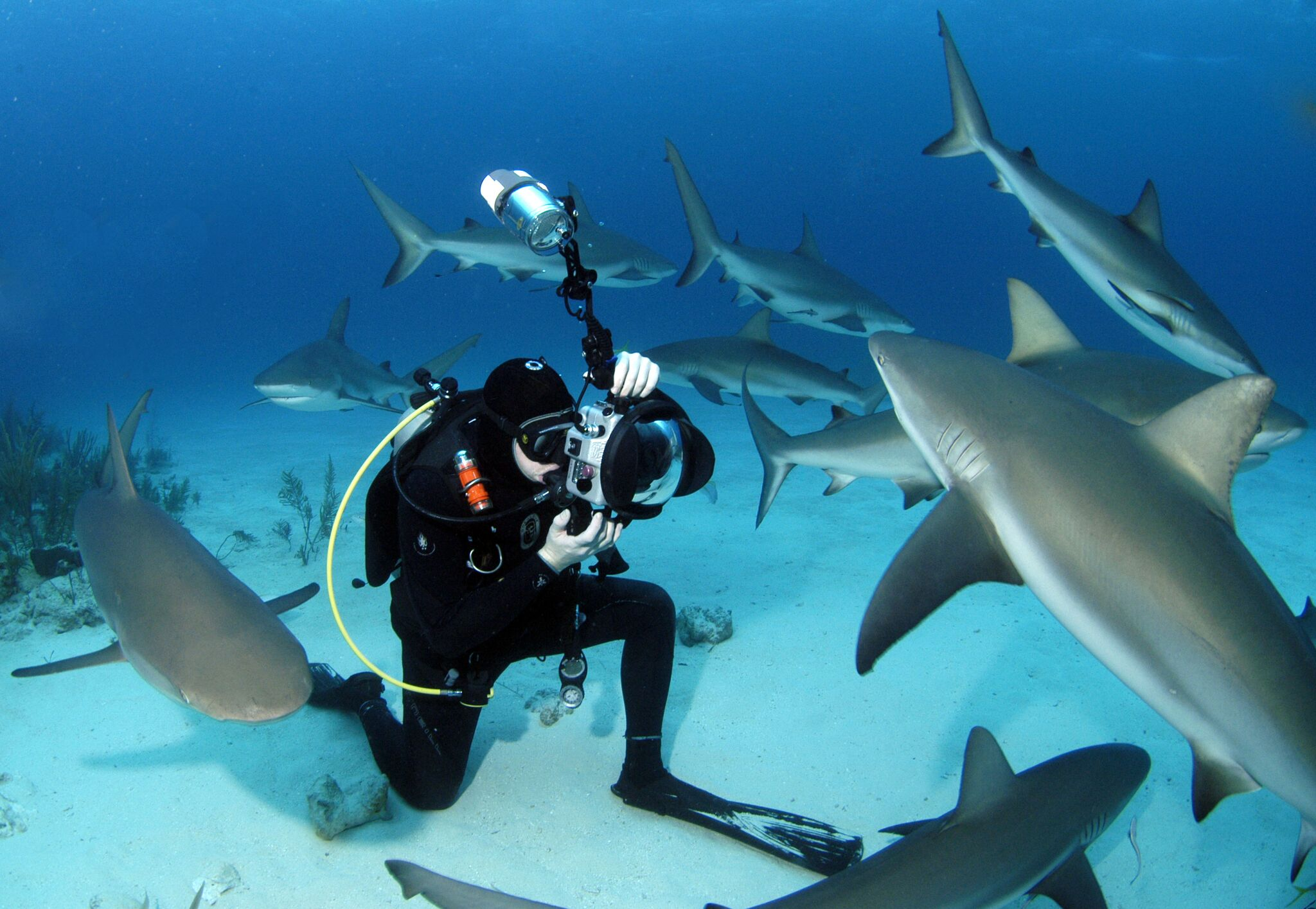 Hai Interaktion Bahamas - © Stuart Cove's Dive Bahamas