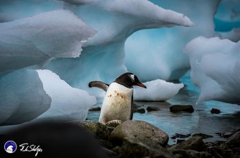 Antarktis © Frank Stelges