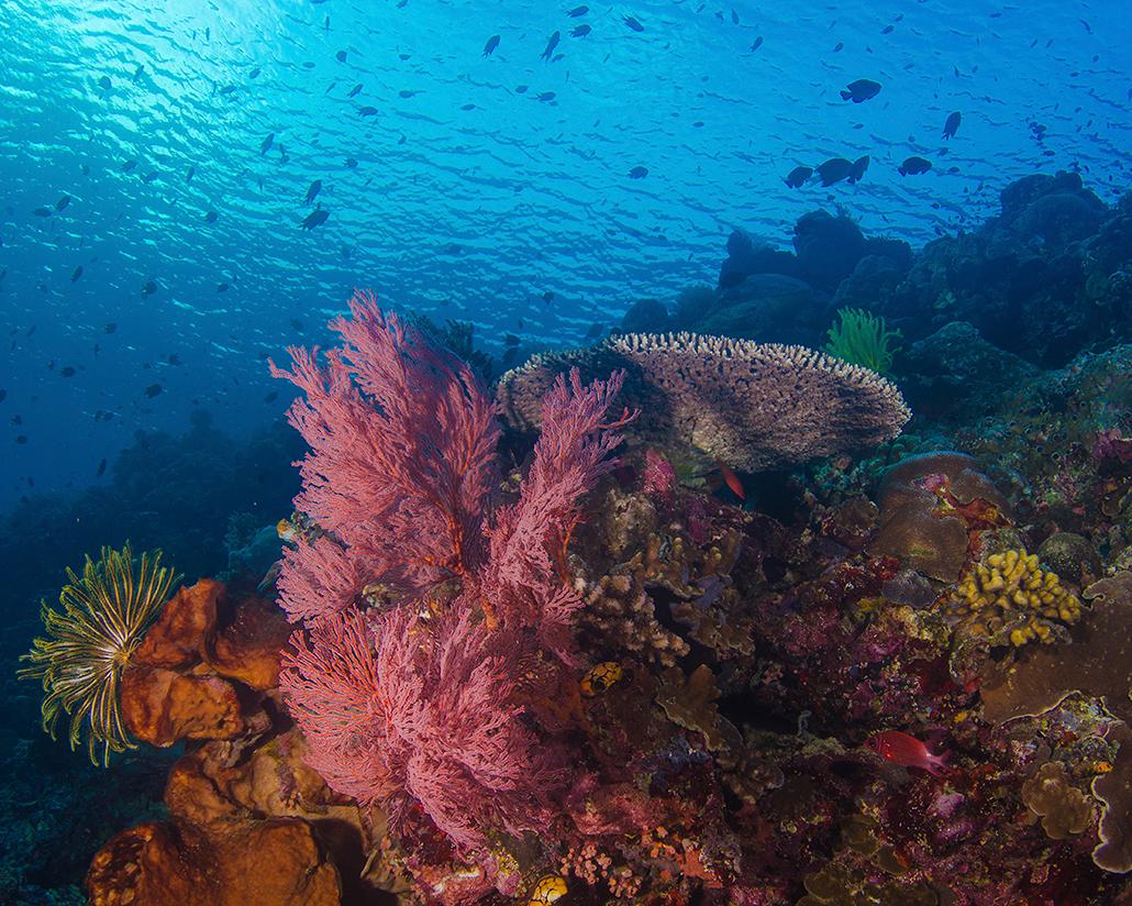 Unterwasserwelt Bunaken Oasis Dive Resort & Spa