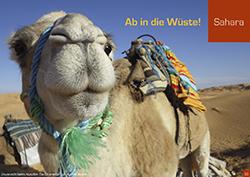 Sahara - Reisemagazin Sommer 2020